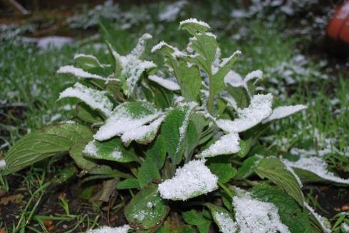 Snow 15 Enero 2013 (1)