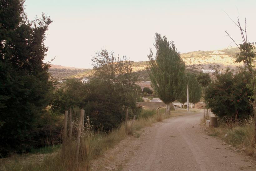 Paseo con los chuchos (1)