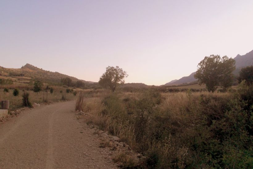 Paseo con los chuchos (3)