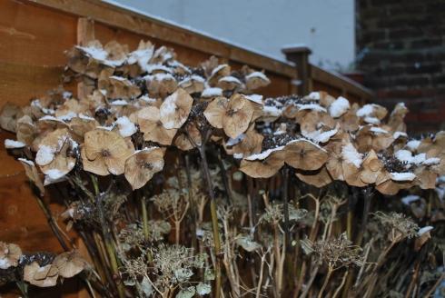 Snow 15 Enero 2013 (6)